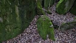 Low Wood 121121   15