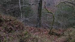 Low Wood 121121   18