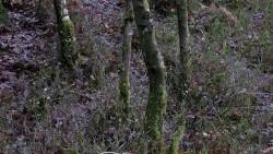 Low Wood 121121   19