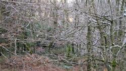 Low Wood 121121   2