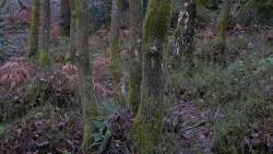 Low Wood 121121   21