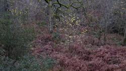Low Wood 121121   22