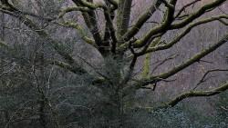 Low Wood 121121   24