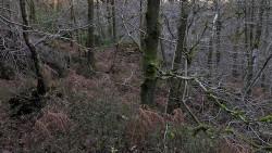 Low Wood 121121   25