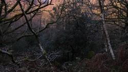Low Wood 121121   26