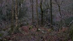 Low Wood 121121   27