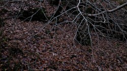 Low Wood 121121   28