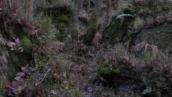 Low Wood 121121   29