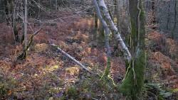 Low Wood 121121   3