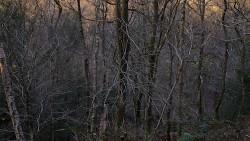 Low Wood 121121   30