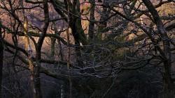 Low Wood 121121   31
