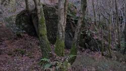 Low Wood 121121   32