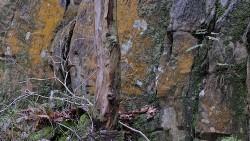 Low Wood 121121   4