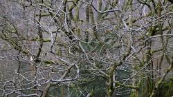 Low Wood 121121   5