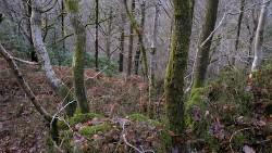 Low Wood 121121   6