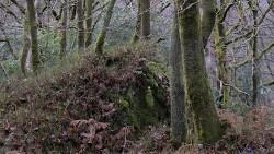 Low Wood 121121   7