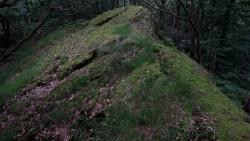 Low Wood  14