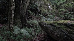 Low Wood  15