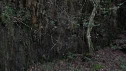 Low Wood  16