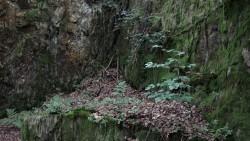 Low Wood  17