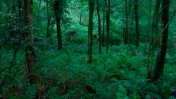 Low Wood  2