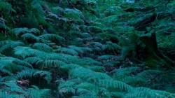 Low Wood 3 1
