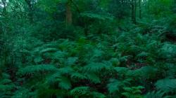 Low Wood  3