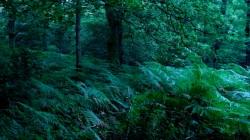 Low Wood 3 3
