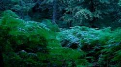 Low Wood 3 4