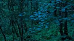 Low Wood 3 5