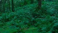 Low Wood  4