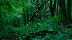 Low Wood  5