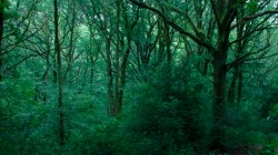 Low Wood  6
