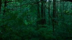 Low Wood  7
