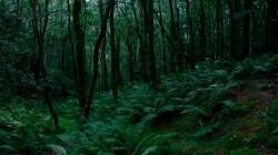 Low Wood  8