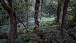 Low Wood  9