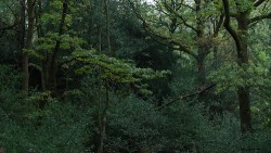 walk in the rain, Low Wood
